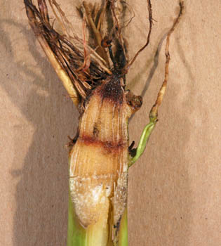 how to detect root rot