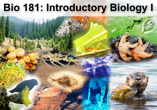 bio 181 Alexis luna introduction trost, 1982 meet the fugates hypotheses madison cawein, a hematologist, became interested after hearing rumors about the blue people when he.