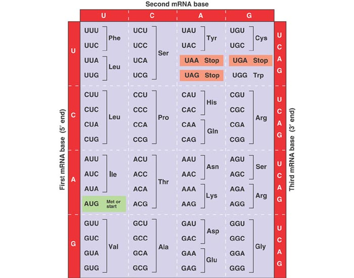 Table Of Codons