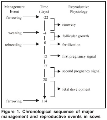 Assessment of the Reproductive System